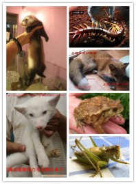 Image: Animals sold on taobao