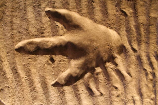 Dinosaur Footprint, Weston Park Museum, Sheffield